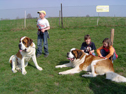 Des saint-bernards